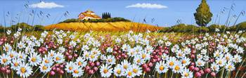 Daisies in Tuscany
