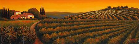 Vineyard at Sunset in Tuscany