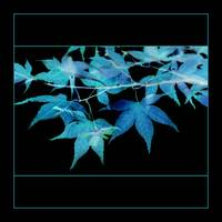 Electric Blue Leaves on Black