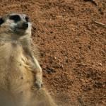 """""""Lazy dayz in the zoo"""" by Kismet"""