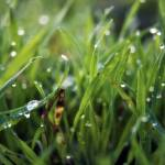 """Dew Drop Grass"" by InspiraImage"