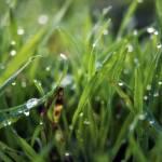 """Dew Drop Grass"" by InspiraImage"