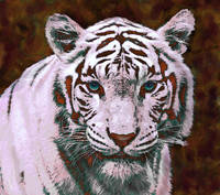 white tiger- pop art