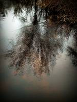 Millis Reflections