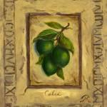 """Italian Limes"" by marilyndunlap"