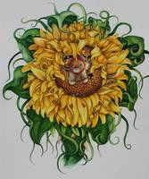 stuff bear in sunflower