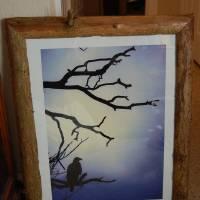 DSC_0057 Art Prints & Posters by Justin Finkbonner