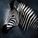 """""""Zebra Portrait"""" by NAR90"""