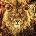 """Subtle Lion"" by Bendinglife"