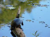 Turtle on a Stick