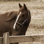 """Sepia horse"" by ScottHovind"
