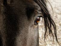 Through the Eye of a Stallion