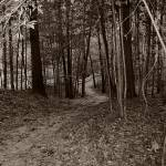 """Walk in the Woods"" by ScottHovind"