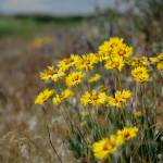 """""""Blanket Flower And Field"""" by OneRudeDawg"""