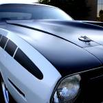 """Cuda 2"" by ScottHovind"