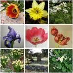 """""""Spring Mosaic"""" by carolmunrophotoart"""