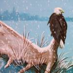 """""""Bald Eagle and Moose Antler"""" by foxbrush"""