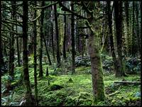 carpet of clover