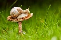 The snail and the mushroom