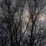 """""""Winter Trees-3659"""" by Fotofrieze"""
