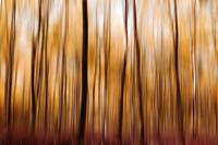 Autumn forest - Abstract