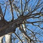 """""""A Tree"""
