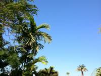 Palm Tree Blue Sky