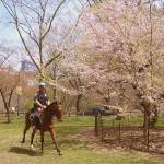 """""""Mounted police Central Park"""" by googoo"""
