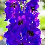 """""""MI - Tall Purple Flower"""" by Fotofrieze"""