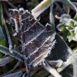 """Morning Frost Crystals-1923"" by Fotofrieze"