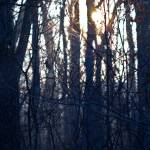 """Sunlight through the Bramble.-1830"" by Fotofrieze"
