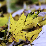 """Yellow Leaf"" by Fotofrieze"