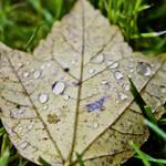 """""""October Rain"""" by Fotofrieze"""