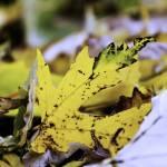 """""""Yellow Leaf"""" by Fotofrieze"""