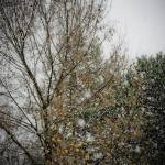 """""""Autumn Snow #2"""" by Fotofrieze"""