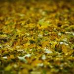 """Leaf Blanket"" by Fotofrieze"