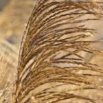 """Long Grass in Winter Sun.-1975"" by Fotofrieze"