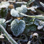 """""""Morning Frost On Green-1925"""" by Fotofrieze"""