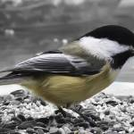 """Feasting Bird"" by Fotofrieze"