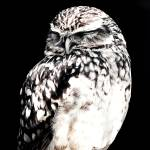 """Night owl"" by seankeithwhite"