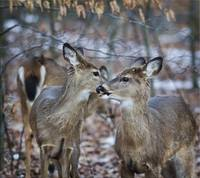 Happy Valentine's Day, My Deer!