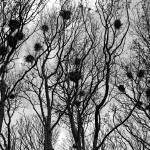 """""""Branches"""" by cofiante"""