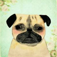 Pug shabby chic portrait Art Prints & Posters by Andrea Sardo