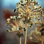 """Tiny Seeds"" by CynthiaHickman"