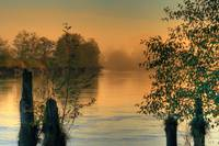 Golden mist by the riverbank