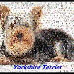 """YorkshireTerrierMontage"" by finalscore"
