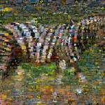 """Zebra Montage"" by finalscore"