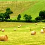 """""""Green fields"""" by Ambika"""