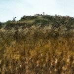 """Tarquinia: wheat field"" by giuseppecoccofotografo"