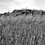 """Tarquinia: wheat field (2)"" by giuseppecoccofotografo"